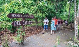 ruta-cacao